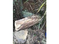 Free large tree log for fire wood