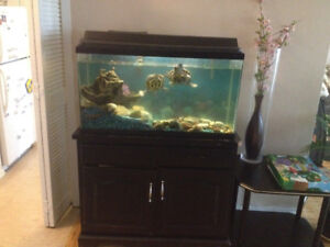 Aquarium for sale with two turtles