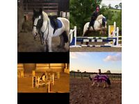 Super 14.1/14.2hh pony for part loan