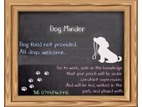 Dog Minder - All Dogs Welcome!