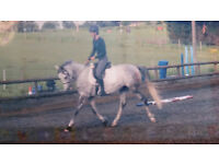 WANTED- experienced and kind rider to share horse