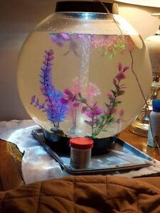 Bio orb 8 gallon aquarium