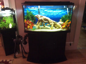 Bow tank and stand 46 gallons