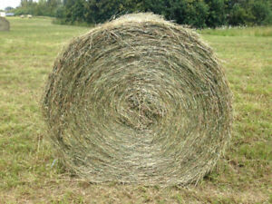 Hay 4'x5' dry / no rain round bales good for horses and other