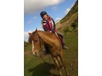 Pony share/ horse share 1-2 days per week