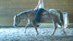$3000 obo   Double reg'd  4 years 10 months  appaloosa mare