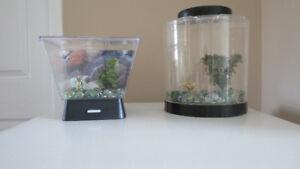 Ensemble de petits aquariums