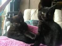 Lovely kittens