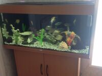 JUWEL FISH TANK AND FISH