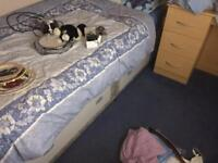 2 singlbeds with mattress free to good home