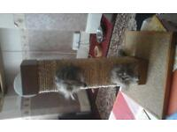 new cat scratching post