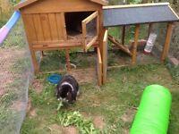 Pair of neutered rabbits