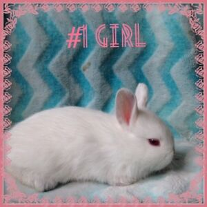 5 gorgeous teeny bunnies for SALE!!!