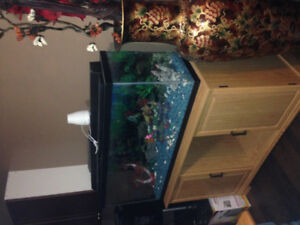 Fish tank with the stand and accessories