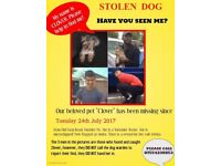 STOLEN! Lost from Finchley, found and carried off Barnet N11