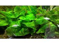 aquarium tropical fish plants