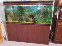 Large fish tank complete with everything