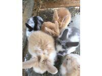 Baby bunnies ready to leave home