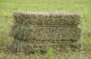 Beautiful small square bales