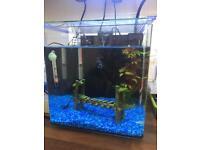 Aqua one 22 litre fish tank with filter ,light,heater