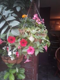 Variety of hanging baskets