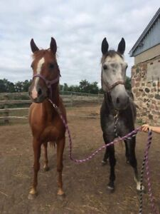 Companion Mare available for ADOPTION