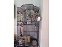 Pair of budgies + XL Cage & Accessories