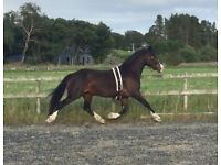 Fantastic opportunity pony for sale!