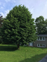 J.K. LANGLOIS TREE REMOVAL SERVICES - CHEAPEST GUYS AROUND