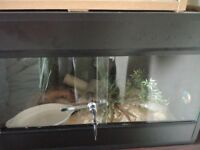 Corn Snake and 2ft Viv with all equipment needed £65