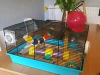 Fancy mice and cage for sale