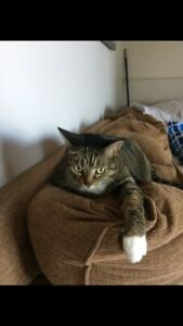 Two free male 9 year old cats