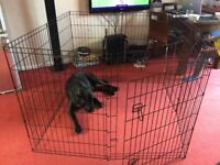 Large Dog Play Pen for £25