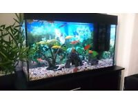 100L FISH TANK FOR SALE WITH FISH