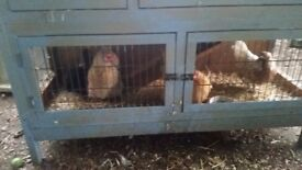 4 Bantam Hens For sale £10 Each