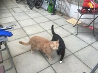 2 young cats, 1.5 and 2 years old from good home for urgent adoption
