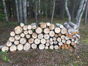 Firewood - free but must be cut
