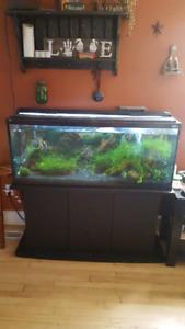 55 g fish tank