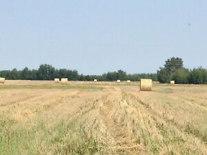 Wheat straw, Fall Rye straw, oat straw for sale