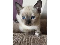 Rare looking kitten