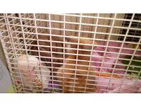 3x baby rabbits