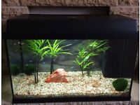 Juwel Rekord 60 litre aquarium with filter and heater complete with tropical fish