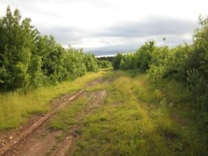 100 acres of good deer hunting property