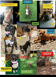 Seeking fosters and fosters to adopt