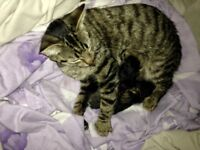 Female cat for rehoming