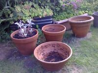 3 Medium sized Terracotta pots (all for £12 or £5 each ) pot in forefront sold