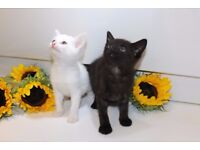 2 happy healthy kittens (both boys) for sale white and black