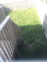 Need someone to pick up dog poop / mow grass