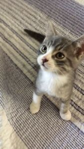Two kittens need forever homes