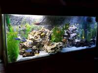 ND AQUATICS 6ft fishtank aquarium complete setup